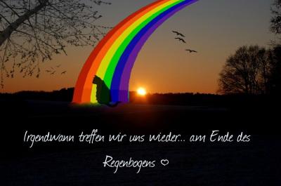 Katzenhilfe Hochsauerland Regenbogenbr 252 Cke